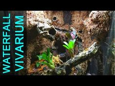 How to build a Natural Vivarium (From Scratch)! - YouTube