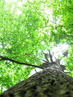 Tree hugging.