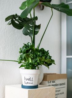 With winter setting in, how to keep your home green.