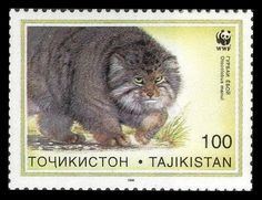Tajikistan 1996 WWF Stamp Wild Cats / Pallas's cat (Otocolobus manul), also called Manul, is a small wild cat with a broad but fragmented distribution in the grasslands and montane steppes of Central Asia.