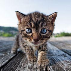 blue eyes...