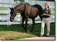 John Henry at age 32. He loved to go for walks around Kentucky Horse Park.  His handlers always treated him like a king, and would let him lead the way.