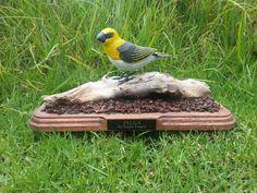 Hawaiian (Maui) Bird Called PALILA