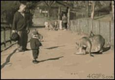 Este cangurito amigable en un zoológico interactivo: | 19 ocasiones en que los canguros comprobaron que realmente son unos desgraciados