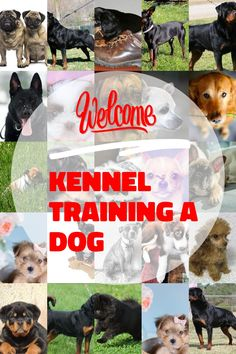 Top Tips For Proper Kennel Training A Dog -- Check out the image by visiting the link.