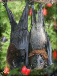 Bat Art - Megabat, Microbat, flying-fox, fruit bat