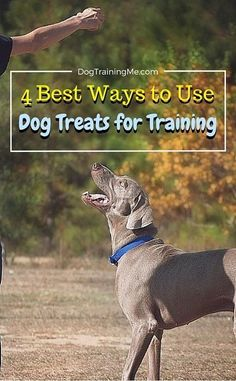 Use the best dog treats to ensure that your training goals are achieved quickly and effortlessly. Find out what are the best dog treats for training and 4 ways to maximize their effectiveness! These simple tips can cut weeks off the time it takes to train your dog! Read our article now.