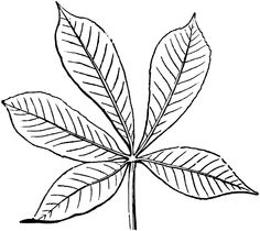 Leaf Coloring Pages That You Can Print For Your Preschool Kids Activity