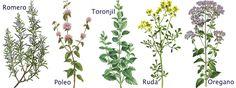 Plantas medicinales de la A a la Z   Frente Fantasma