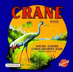 """Fantastic """"winter gardening"""" detail is readily available on our internet site. Check it out and you wont be sorry you did. Vintage Labels, Vintage Postcards, Vintage Ads, Vintage Food, Retro Ads, Vintage Travel, Vintage Signs, Florida Oranges, Florida Blue"""