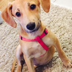 #zia #puppy #association4newlife #ilereunion