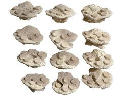The Small Magnetic Frag Rocks in ceramic white are designed to grow out up to five corals on up to glass. Reef Aquarium, Corals, Magnets, Rocks, Ceramics, Glass, Food, Design, Ceramica