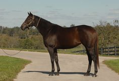 Miss Macy Sue(2003)(Filly) Trippi- Yada Yada By Great Above. 3(F)x4(F) To Ta We, 5(C)x4(F)x5(F) To Intentionally. 25 Starts 11 Wins 5 Seconds 3 Thirds. $880,915. Won Winning Colors S(G3), Carousel S, Presque Isle Downs Masters S, Saylorville S(Twice), 2nd Winning Colors S(G3), Presque Isle Downs Masters S, Saylorville S, WV Secretary Of State H, Iowa State Fair S, 3rd BC Filly & Mare Sprint, Ontario Fashion S(Can).