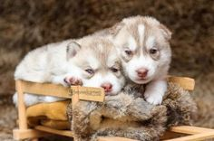 Cutest-Puppies-Ever-11