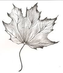 Supreme Portrait Drawing with Charcoal Ideas. Prodigious Portrait Drawing with Charcoal Ideas. Fall Drawings, Pencil Drawings Of Flowers, Art Drawings Sketches Simple, Flower Sketches, Pencil Art Drawings, Maple Leaf Drawing, Tattoos Motive, Leaves Sketch, Art Du Croquis