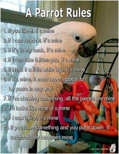 Parrot Rules  https://funtimebirdy.wordpress.com/category/bird-humor-2/
