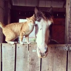 Horses and cats are great together lol