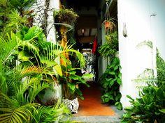 akoyamamoto: Well made green sanctuary