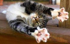 Stretch paws