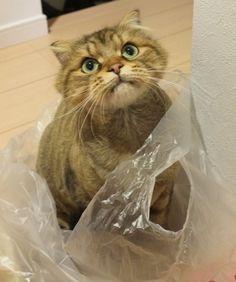 Where's my tuna?