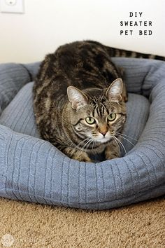 Learn how to turn an old sweater into a new bed for your furry friends! You probably have everything you need to do it right now!