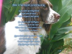 Springer poem. So true they are great companions and truly our BEST friends.