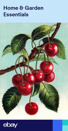 Essay On My Favourite Fruit Appleapple Is Best Of All Fruits As It  Vintage Cherries On A Branch Cherry Quilting Fabric Block X
