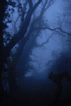 buron:  Voyage dans la Brume Fluorescent (xl) ©buron- November '13