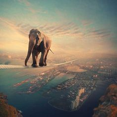 elephant-interesting-surprising-photography-manipulation