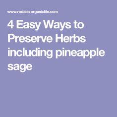 4 Easy Ways to Preserve Herbs including pineapple sage Preserve Herbs, Salvia Plants, Pineapple Sage, Good Housekeeping, Preserving Food, Drying Herbs, Herbal Medicine, Herb Garden, Preserves