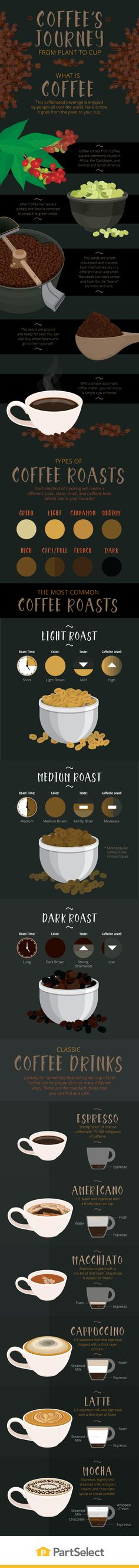 The Process Of Making Coffee - Infographic