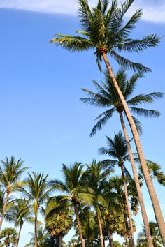 Palm trees in the wind in Phuket, Thailand. - www.bewarethecheese.com