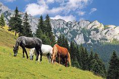 Ilyen rendkívüli vizuális kombinációt ritkán kaphat lencsevégre az ember Fotó: Fodor István Akita, Horses, Urban, Mountains, Amazing, Nature, Travel, Animals, Naturaleza