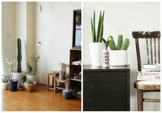 03-decorar-con-cactus-rincon
