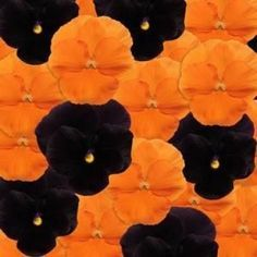 black and orange colors mixed - Google Search