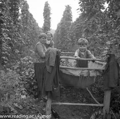 Hop picking Beer Photos, Old Photos, Vintage Photos, London Map, Old London, London History, British History, Old Fashioned Photos, England Countryside