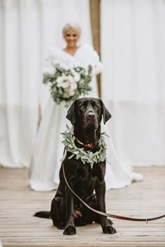 Bride's Adorable 'First Look' Photo Shoot With Her Beloved Dog Goes Viral Dog Wedding, Wedding Pictures, Cute Pictures, Dream Wedding, Wedding Day, Wedding First Look, Cute Wedding Ideas, I Got Married, Groom And Groomsmen