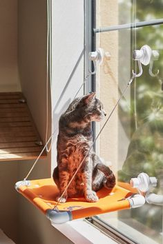 Cat Bed Sunny Window Perch. Attaches to windows and gives your feline family a majestic view all day   #Cat #Cats #CatBed #Bed #Perch #Perches #CatPerche #CatPerches #Window #WindowCatbed #WindowCatPerch #Windowperch #pet #pets #petbed #petbeds