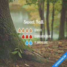 Sweet Fall — Essential Oil Diffuser Blend