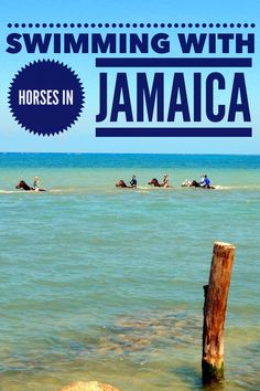 What is it like to ride horses in Jamaica? Husband declares what not to do in Jamaica!