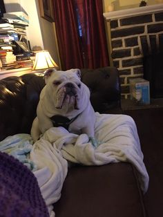 Archie looks so forlorn when I'm on nightshift.http://ift.tt/2sjtgJ9