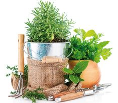 Čo je pri starostlivosti o bylinky v záhrade dôležité? | Urob si sám Planter Pots