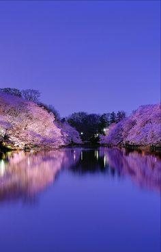 Stunningly beautiful!   | nature | | reflections |  #nature  https://biopop.com/