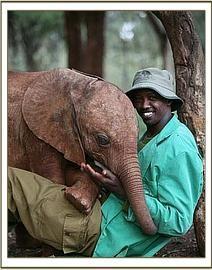"""Baby courtesy of """"The David Sheldrick Wildlife Trust."""""""