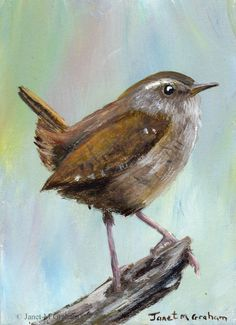Wren ACEO Bird Wildlife Original Bird ACEO Acrylic Painting Janet M Graham