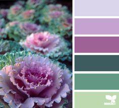 de bovenste kleur lila