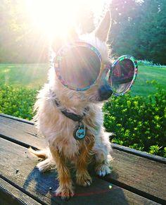 Dog days of summer.