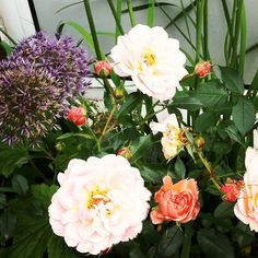 Pale rose with Alliums