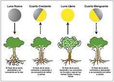 ciclos de la luna - Buscar con Google