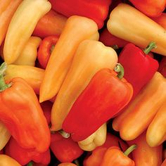 Chablis Hybrid Pepper Seeds: Ready just 2 months after transplanting! Sweet Bell Peppers, Stuffed Sweet Peppers, Cubanelle Pepper, Chilli Plant, Capsicum Annuum, Pepper Plants, Pepper Seeds, Organic Seeds, Sweet Cherries